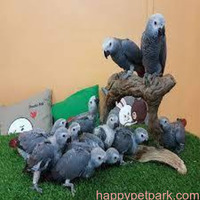 Wide Species Of Birds And Parrots Available